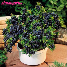 200pcs/bag Blueberry Bonsai Edible Fruit Indoor Outdoor Available plant tree Home Garden