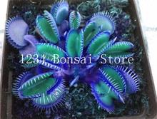 Бесплатная доставка 50 шт. горшках насекомоядные растения bonsais Dionaea Muscipula Гигантский Клип Венера Flytrap бонсай цветок саженцы