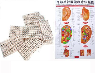 The ear reflective zones health therapy chart  600pcs Auricular