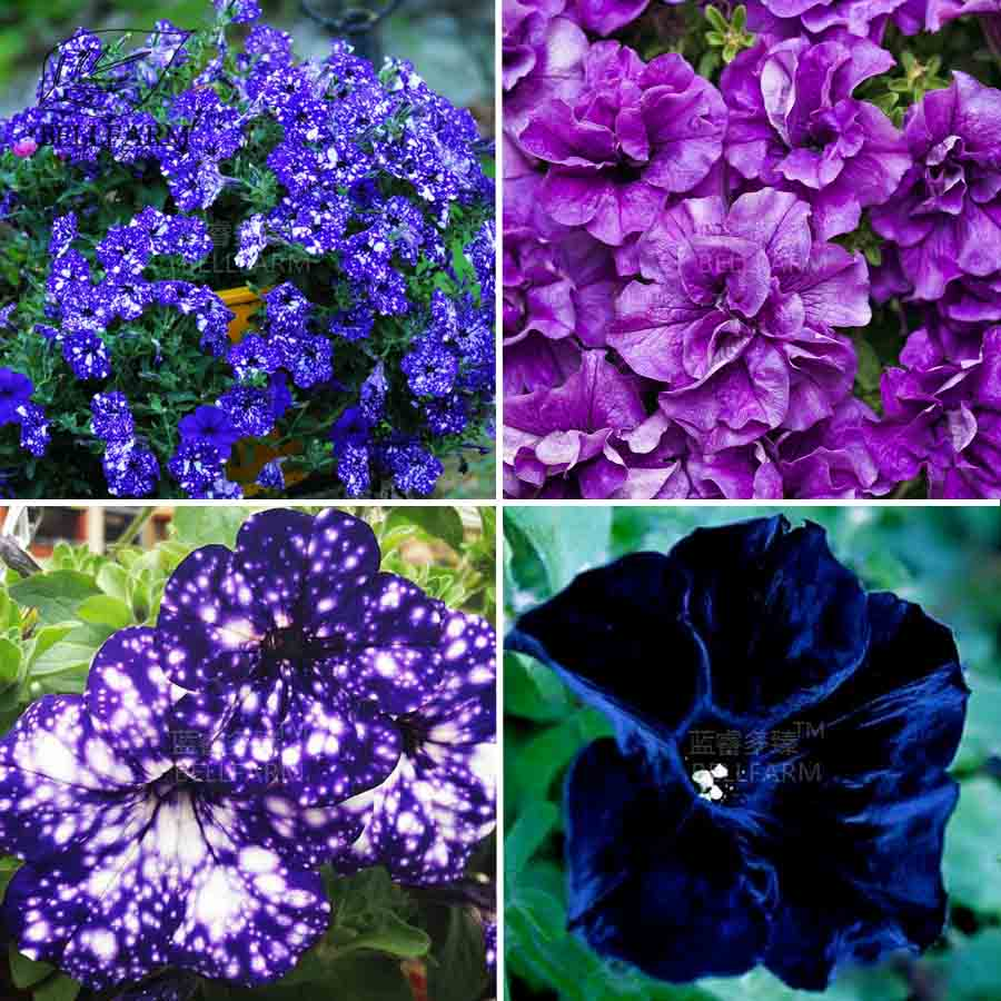 Buy Moon Garden Flowers And Get Free Shipping On Aliexpress