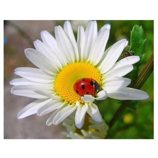 5D Diamond Embroidery Flower White Daisy ladybug 3D Square ...
