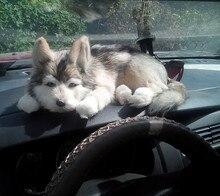 Simulation Pet Large Husky Plush Toy 1 Piece Free Shipping