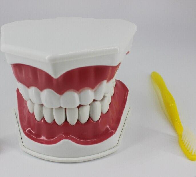 치과 재료 치과 교육 모델 장비 어린이 구강 교육