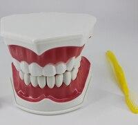 Dentaire matériaux et fournitures dentaires enseignement modèle cavité Buccale de matériel Enfants enseignement