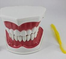 Dental materials and supplies dental teaching model equipment Children 's Oral cavity teaching