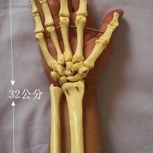 Человеческий скелет Ulnar Humerus ручной шарнир медицинская модель скелета обучающая модель игрушки биология анатомическая модель