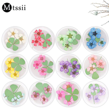 1 Box MTSSII Colorful Real Nail Dried Flower Clover Leaf Preserved Flower 3D Manicure Nail Art Decoration
