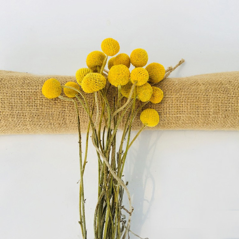 20pcslot natural dried craspedia 059 118 round yellow billy 20pcslot natural dried craspedia 059 118 round yellow billy balls dried flowers wedding bouquet artificial decorative flower in artificial dried mightylinksfo