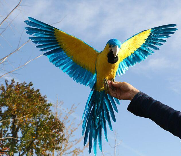 Grande simulation ailes perroquet modèle polyéthylène & plumes bleu & jaune oiseau artisanat cadeau environ 65x110 cm s2970