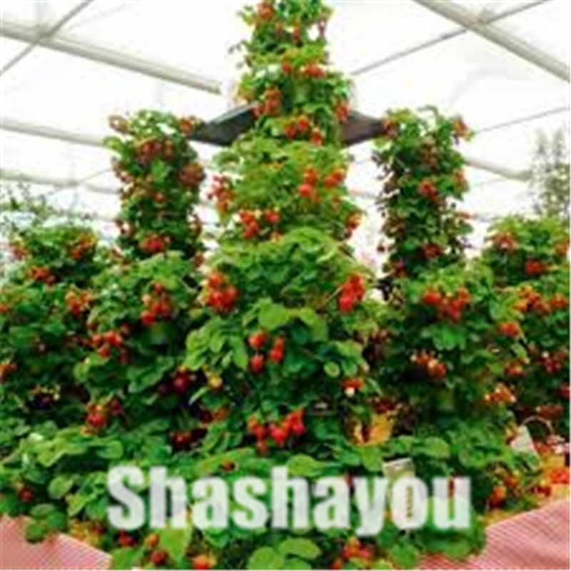 Grote Verkoop! 200 stks Red giant Klimmen Aardbei Bonsai Fruit floresling Voor Huis & Tuin DIY Potplanten voor bonsai Fruit