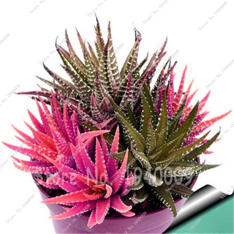 Online Get Cheap Cactus Red Flower
