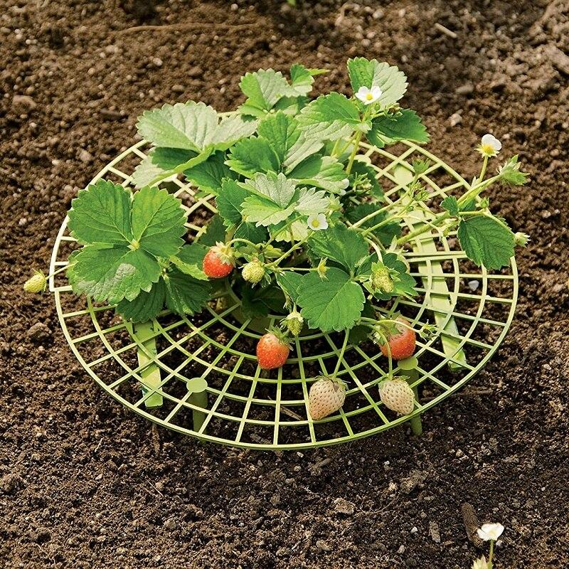 5 комплектов 30 см Поддержка выращивания клубники s Съемная Поддержка растений далеко от почвы держать клубнику от гнили в дождливые дни