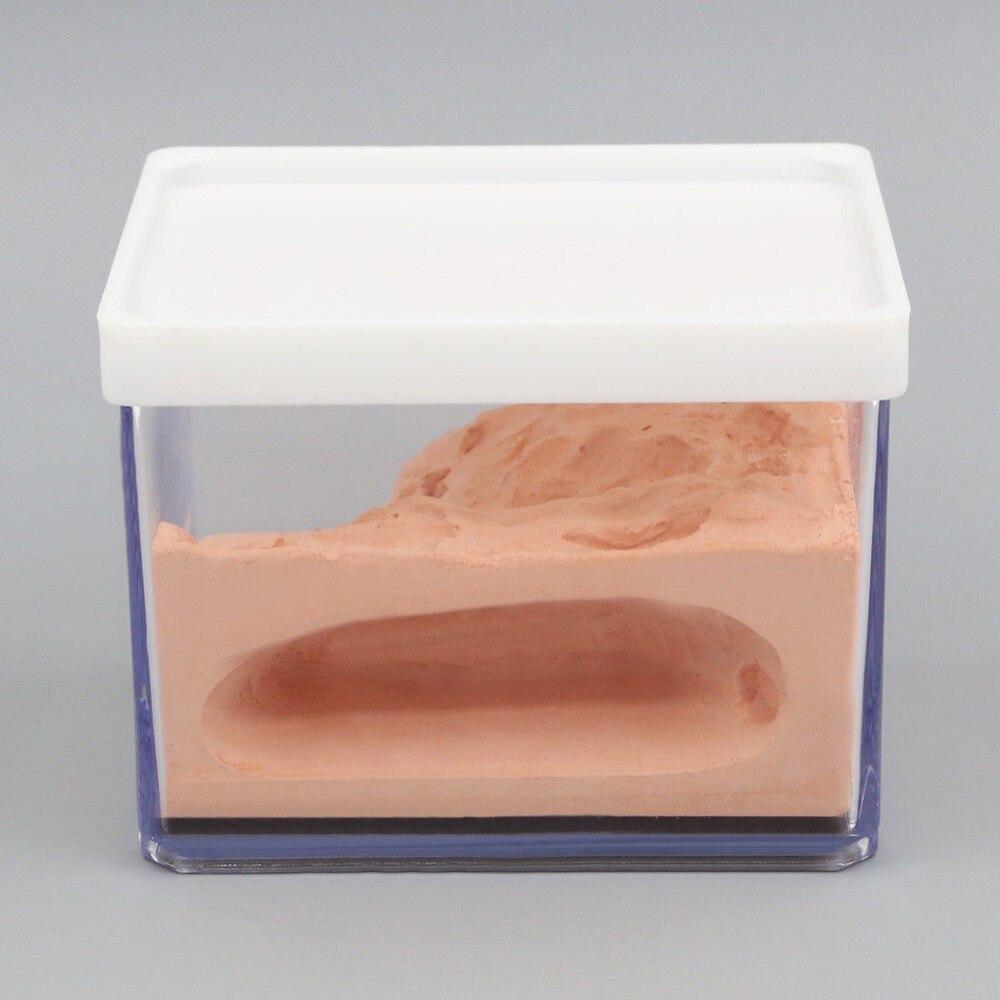 Муравей гнездо корпус муравей фермы коробка Formicarium Дисплей Чехол для маленького муравья колонии био