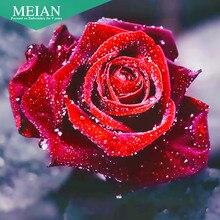 Meian, полный 5D DIY алмазная живопись, цветок розы, вышивка крестом, 3D, Алмазная мозаика, рукоделие, рукоделие, алмазная вышивка, подарок, картина