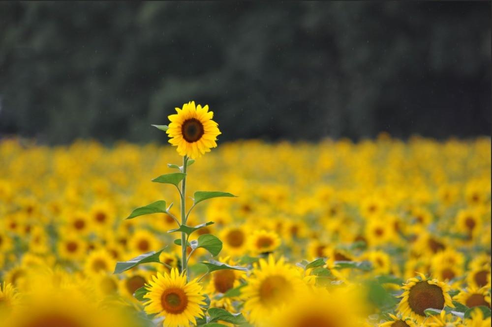 Unduh 64+ Background Kuning Gelap HD Gratis