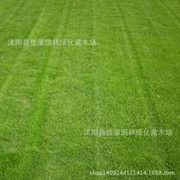 Zoysia Grass Seed Imported From Japan Extended To Blue Grass Seed Awl Trampling Warm Season Drought