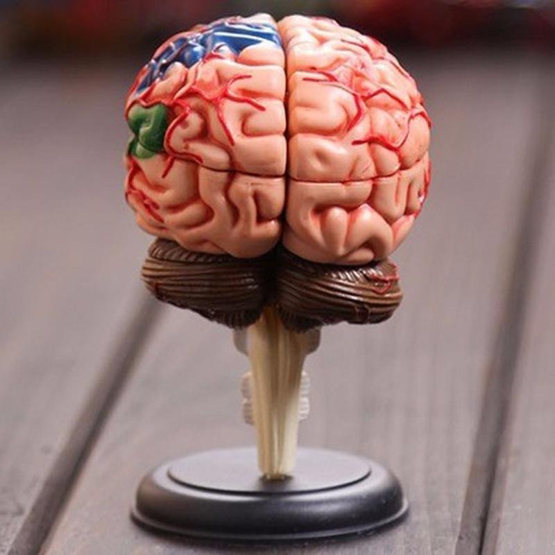 Free Shipping 4D Human 9.3*6.1*4.8cm Brain Model Brain Structure Model Assembled Human Anatomy Dimensional Model 32pcs