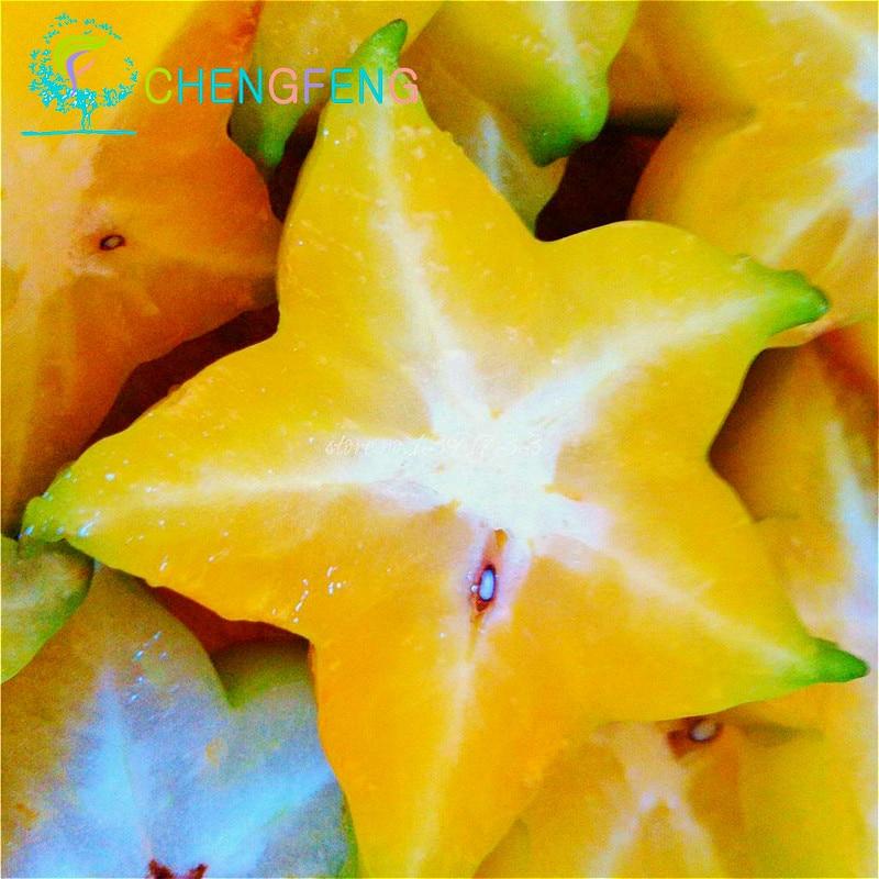 5pcs Carambola Seeds Star Fruit Seeds Averrhoa Carambol