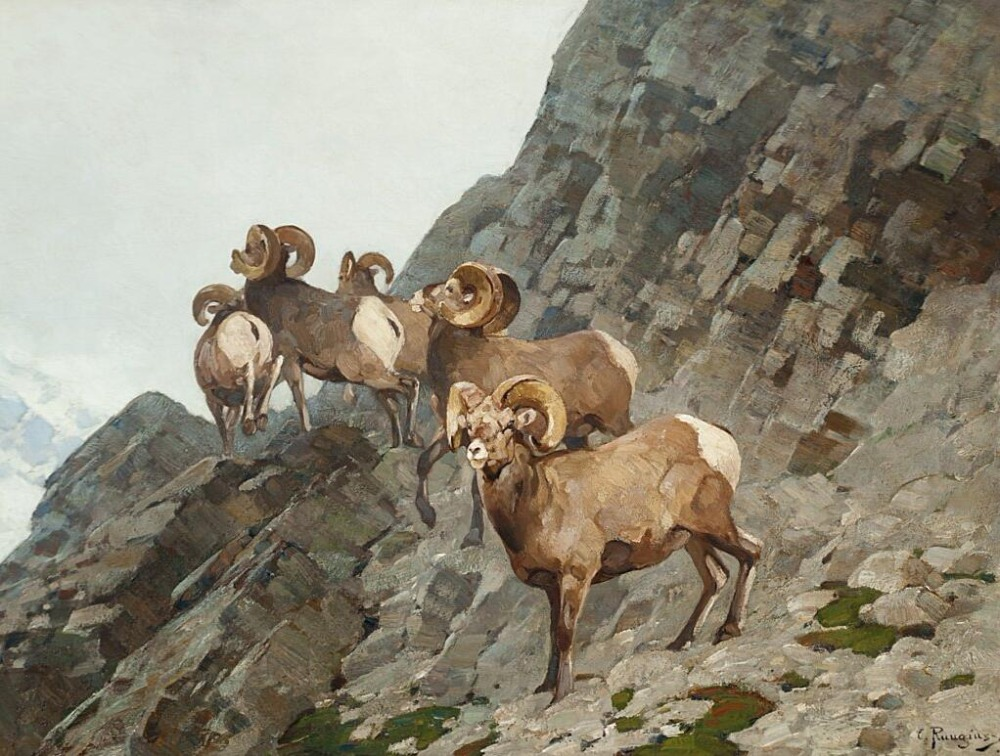 High quality Oil painting Canvas Reproductions Bighorn Sheep By carl rungius hand paintedHigh quality Oil painting Canvas Reproductions Bighorn Sheep By carl rungius hand painted