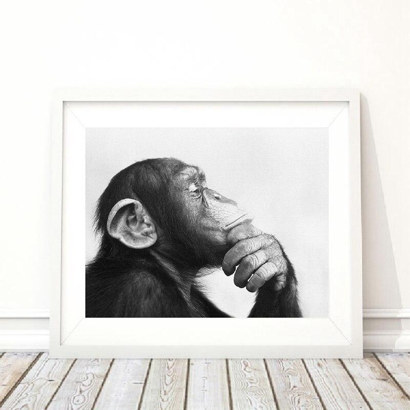 38+ Gambar hewan monyet hitam putih terupdate