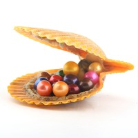 10 PCS/lot Twins Pearls Shell Freshwater Cultured Love Wish Pearl Oyster with 8 8.5 mm Round Pearls Random Color
