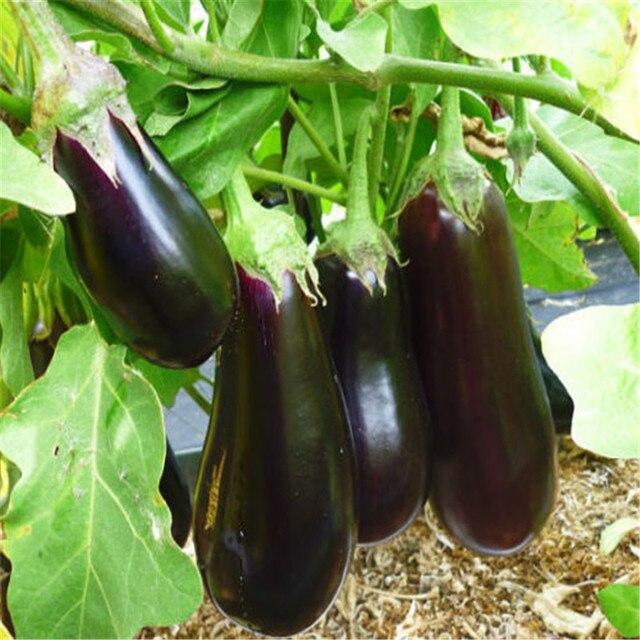 Картинки по запросу Вкусный синий овощ