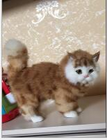 WYZHY simulation cat Home decoration creative desktop decorations photo photography props to send friends gifts 23 9 20CM in Real Life Plush from Toys Hobbies