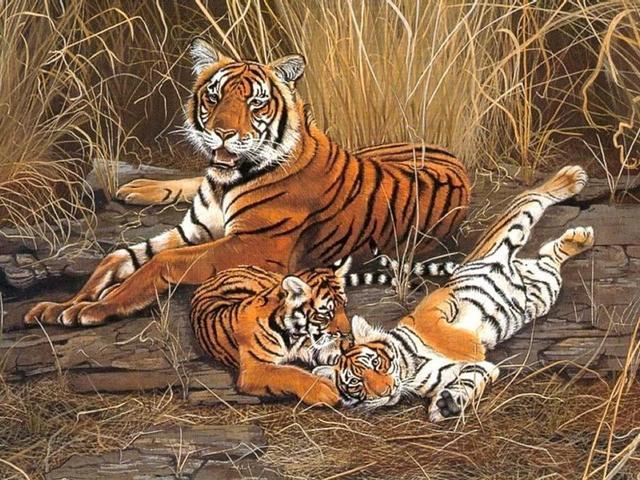 Leuke Posters Woonkamer : Woonkamer thuis wanddecoratie stof poster dieren leuke tigers