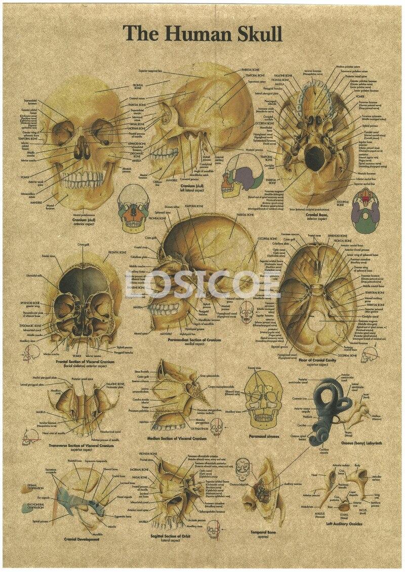 Fantastisch Große Anatomie Poster Ideen - Menschliche Anatomie ...