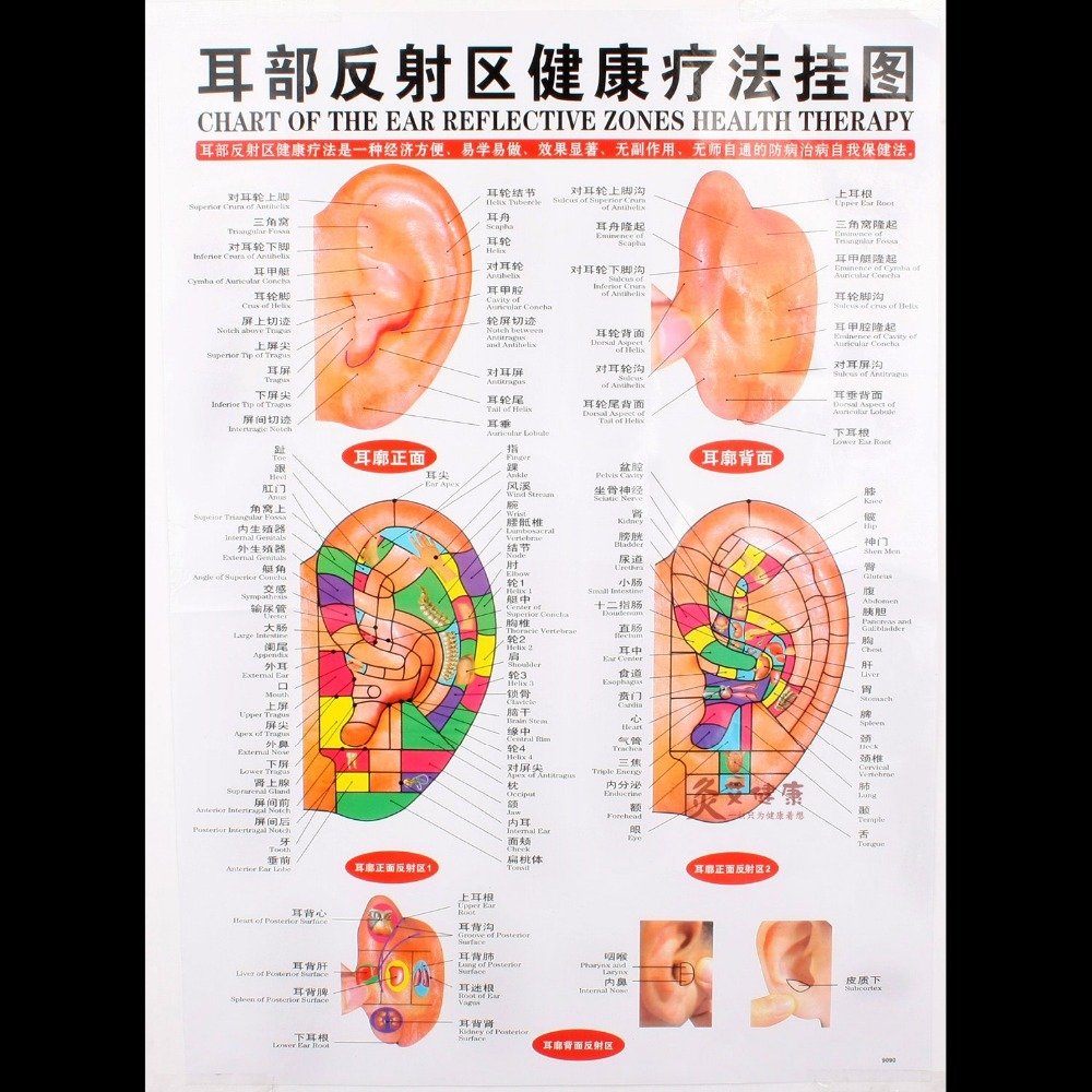 Free Acupuncture Charts - acupunctureproducts.com