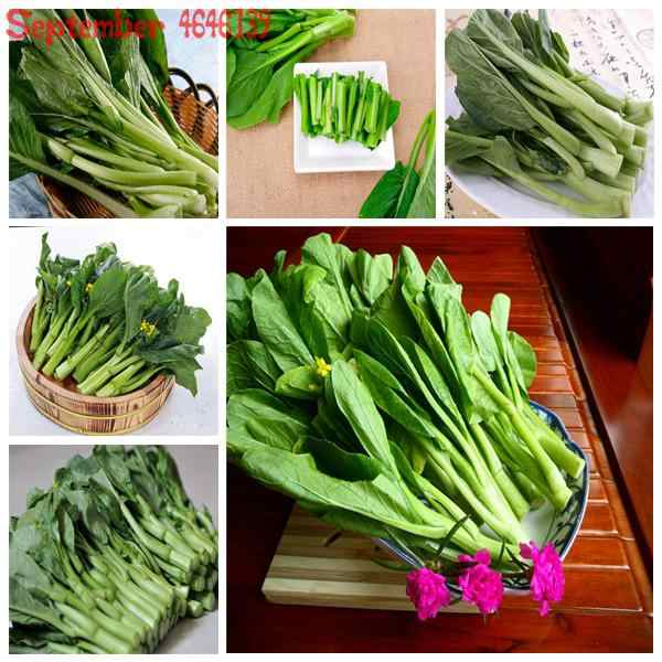 On sale100pcs Chinese Cabbage Vegetable Easy To Grow Outdoor Bonsai Organic Garden Planting Vegetable For Flower Pot Planter