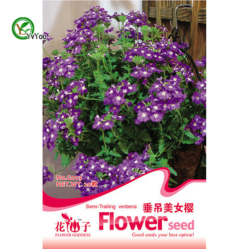 Hanging Verbena Seeds  Flower Seeds Indoor Bonsai plant 30 particles / lot q011