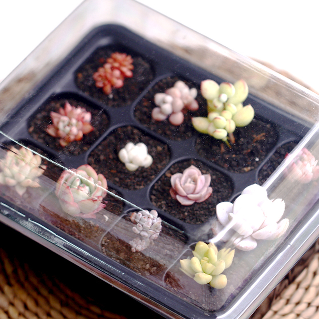 WCIC 12 Holes Plant Seedling Tray Plastic Square Shaped Nursery Pot Vegetable Fruit Sprout Plate Flowerpot Garden Seedling Box