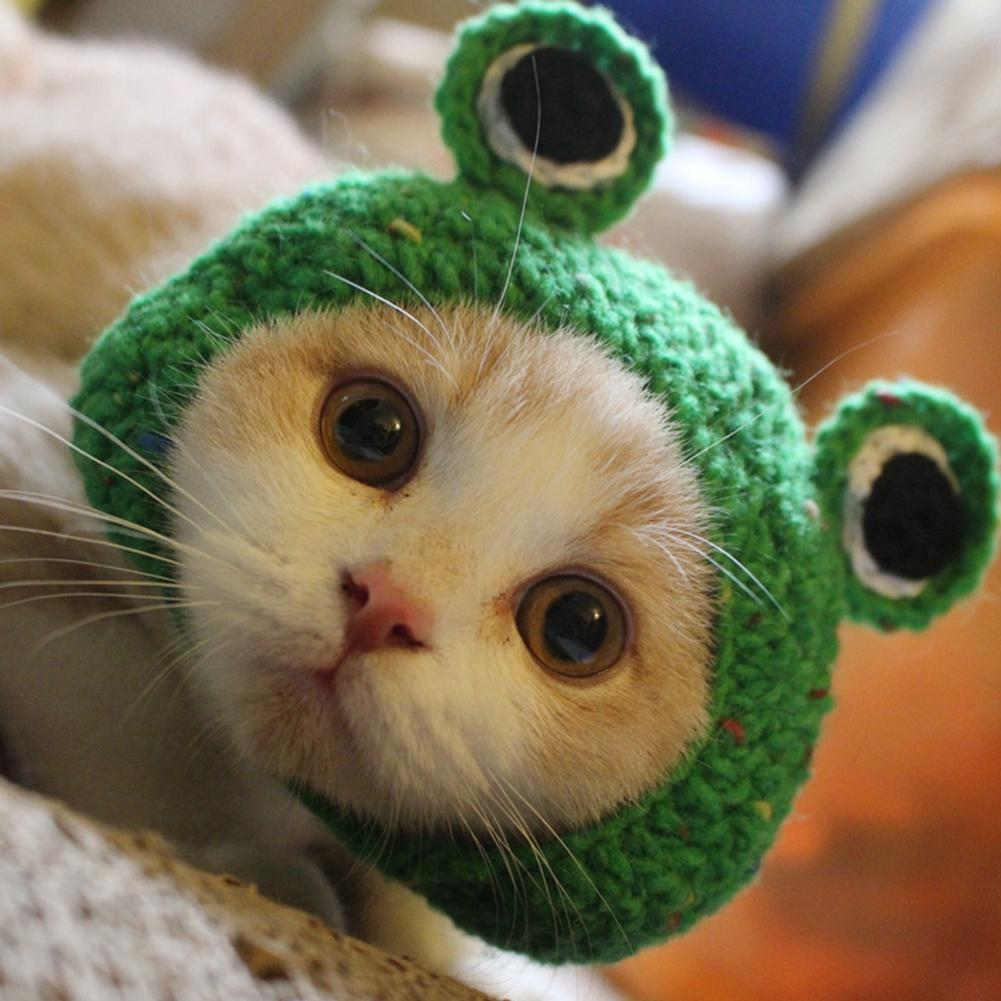 Lumiparty Handmade Diy Pet Cat Dog Creative Frog Design Hat Warm Knitted Hat Gift For Pets-25