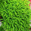 ONE Plastic Eucalyptus Leave Turf 60 40cm Rectangle Green Color Fake Lawns For Supper Market Wedding