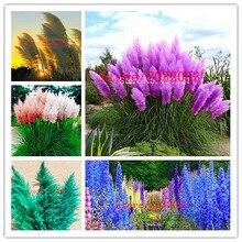 bonsai 1000 pcs/bag pampas Rare Purple Pampas Grass  Ornamental Flowers Cortaderia Selloana