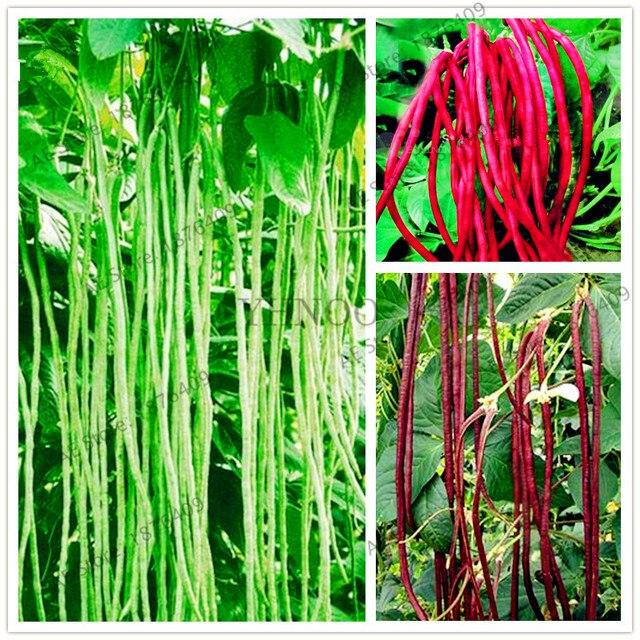 Longo de Feijão Vigna Unguiculata bonsai, plantas Hortícolas Caupi Feijão Cobra, Jardim flores De Feijão longo, 20 pçs/saco