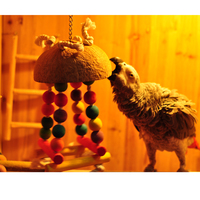 Colorful Parrot Bird Wood Toys Swing Chew Toys Fun Medium Size For Gold Macaw Sun Conure