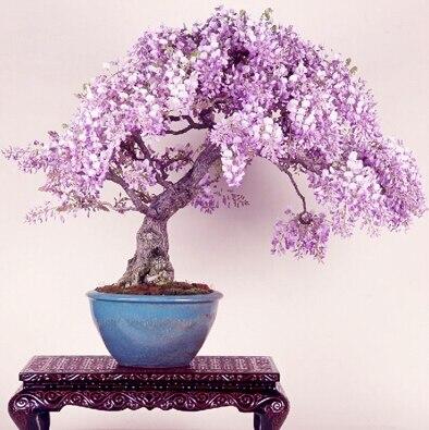 piantare lillà-acquista a poco prezzo piantare lill&agrave ... - Un Piccolo Giardino Fragrante
