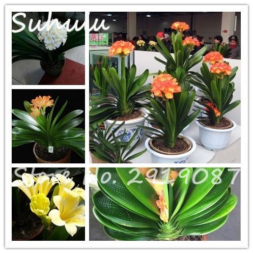 popular best office desk plants-buy cheap best office desk plants
