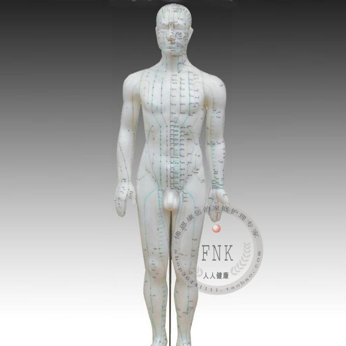 MEDICAL training supply Human body acupuncture point model 50cm model the body of the meridian model free shipping english medical female human body acupuncture point model 48cm