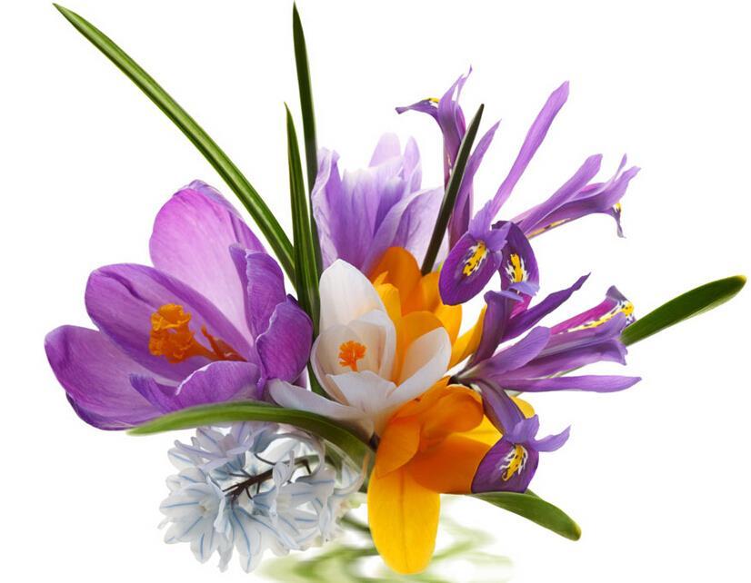 1pc Bulb Saffron Bulbs Saffron Flower Saffron Crocus It Is ...