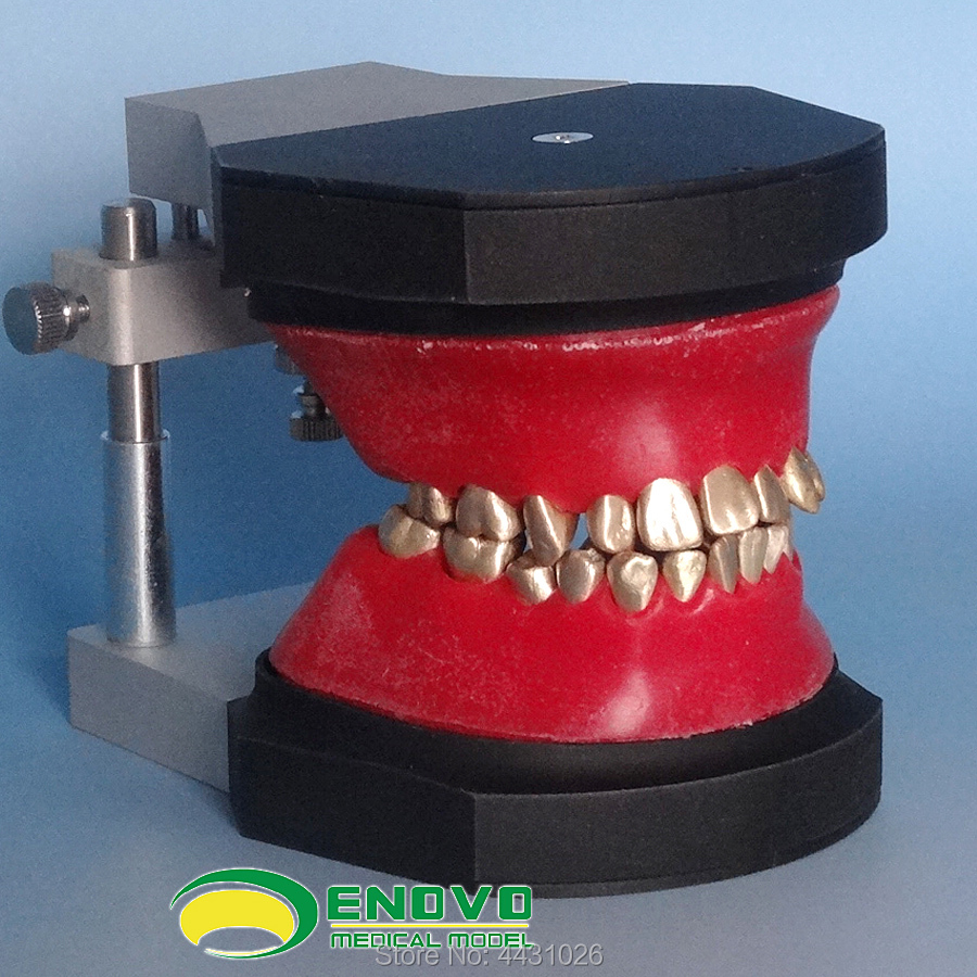 ENOVO Orthodontic training in orthodontics цены