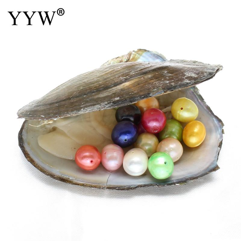 Freshwater Vacuum-pack Oyster Wish Pearls Mussel Shell with Pearl Inside Pearl Mysterious Surprise Gift Potato shape 9-10mm