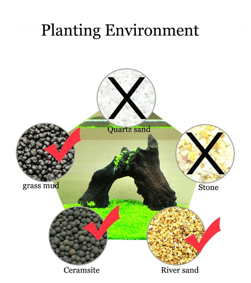 Water Grass Seed Aquarium Aquatic Plants Seeds Easy Planting Fish Tank Landscape Ornament Lawn Decor10