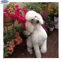 Diamond Painting Poodle-Dog-Pet Photo Custom Rhinestone Cross-Stitch Home-Decor Diy 5d