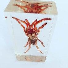 Тарантул внешний вид Встроенный образец членистоногие настоящий паук образец модели преподавание биологии помощь Творческий смолы ремесло