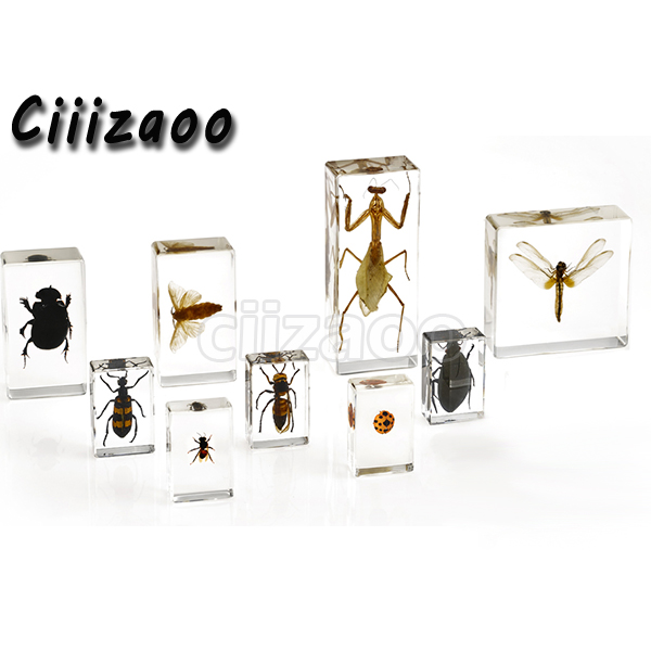 Image 3 - Life Cycle of Silkworm specimen  paperweight Taxidermy Collection embedded In Clear Lucite Block Embedding Specimen-in Educational Equipment from Office & School Supplies