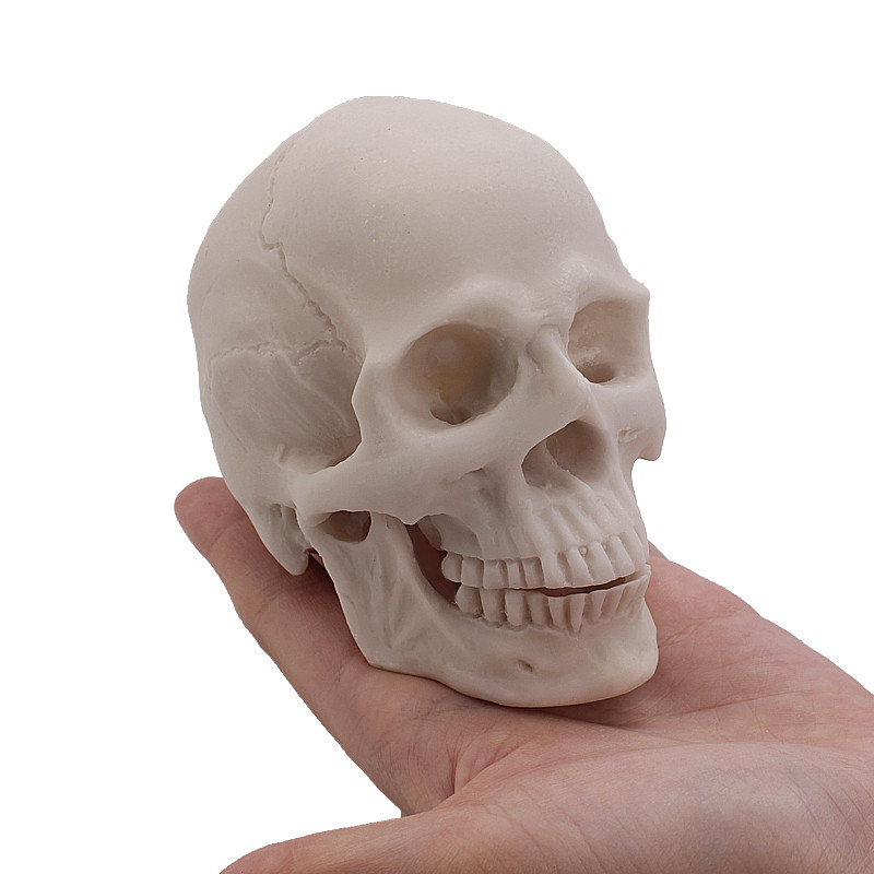 For Sale Human Skull Pelvis Jaw Crafts And Scrapbooking Cutting