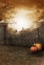 Laeacco Halloween Yard Brick Wall Tree Branch Pumpkins Photography Background Customized Photographic Backdrops For Photo Studio